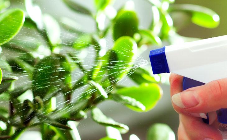 Water spray bottle misting green plants.